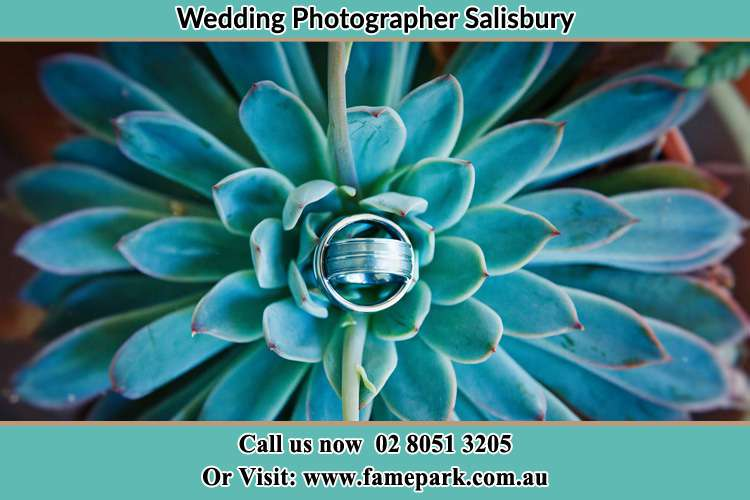 Photo of the wedding ring design at the top of the plant Salisbury NSW 2420