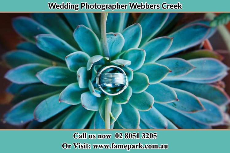 Photo of wedding ring design at the top of the plant Wangat NSW 2420